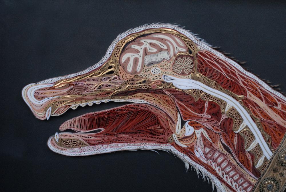 Canis Lupus Familiaris (detail) 360dpi.jpg