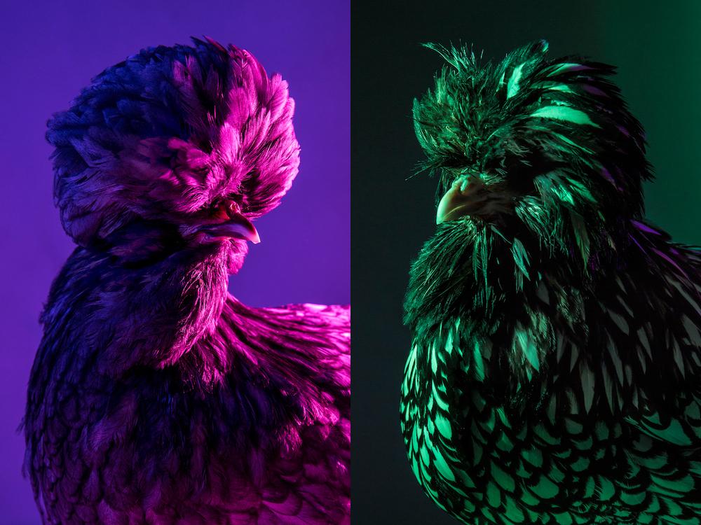 Chic Chicks ©Dan Bannino - Crystal+Anastacia.jpg