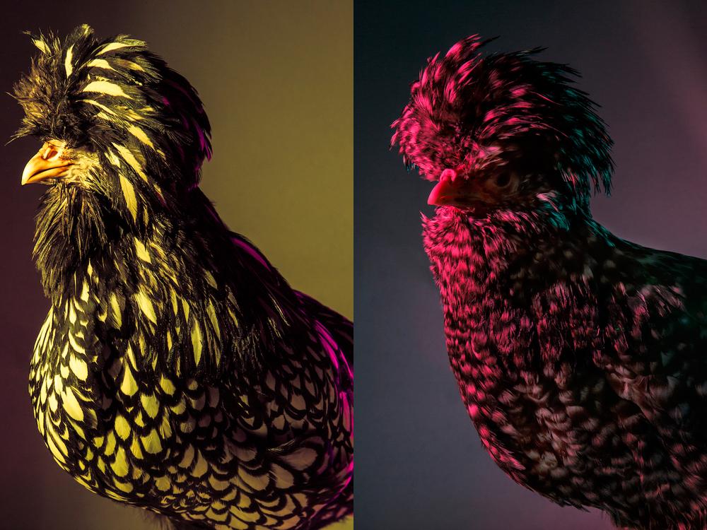 Chic Chicks ©Dan Bannino - Elza+Jennifer.jpg