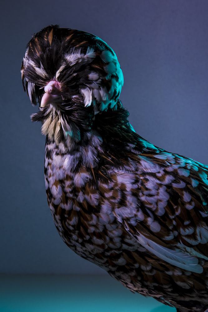 Chic Chicks ©Dan Bannino -Chantal:Tolbunt coat-.jpg