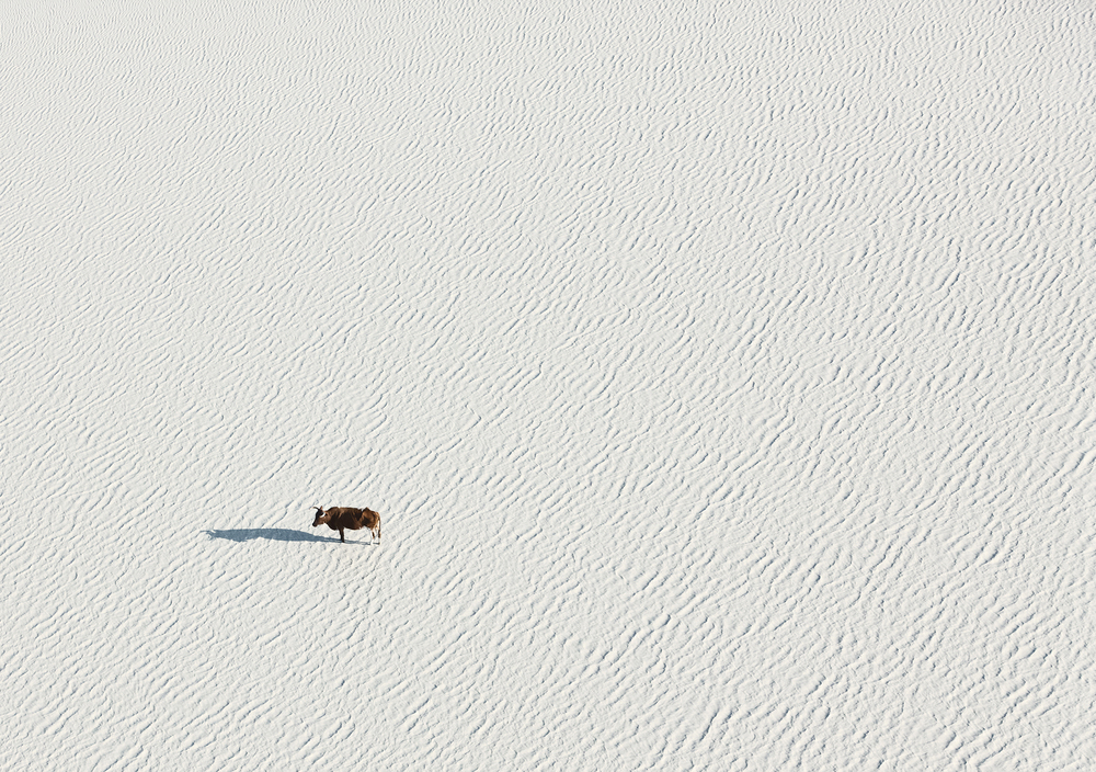 Lone Bull.jpg