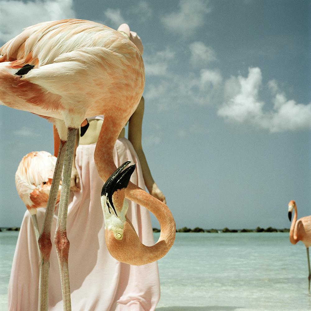 flamingogoed.jpg