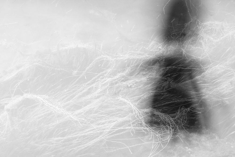 Pamela_Barba_Your Shadow.jpg