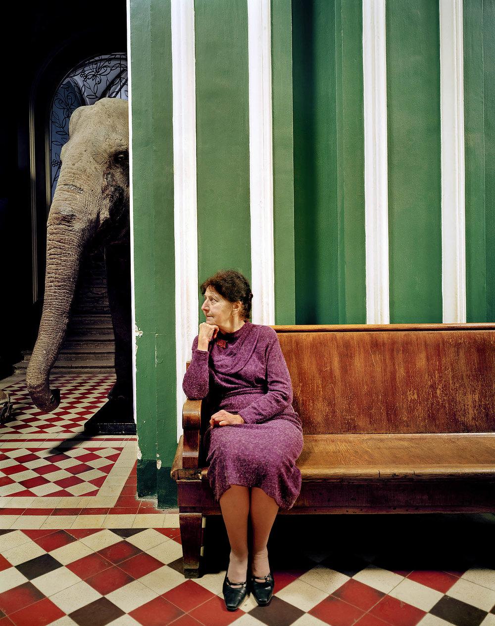 frankherfort_elephant_i_2005.jpg