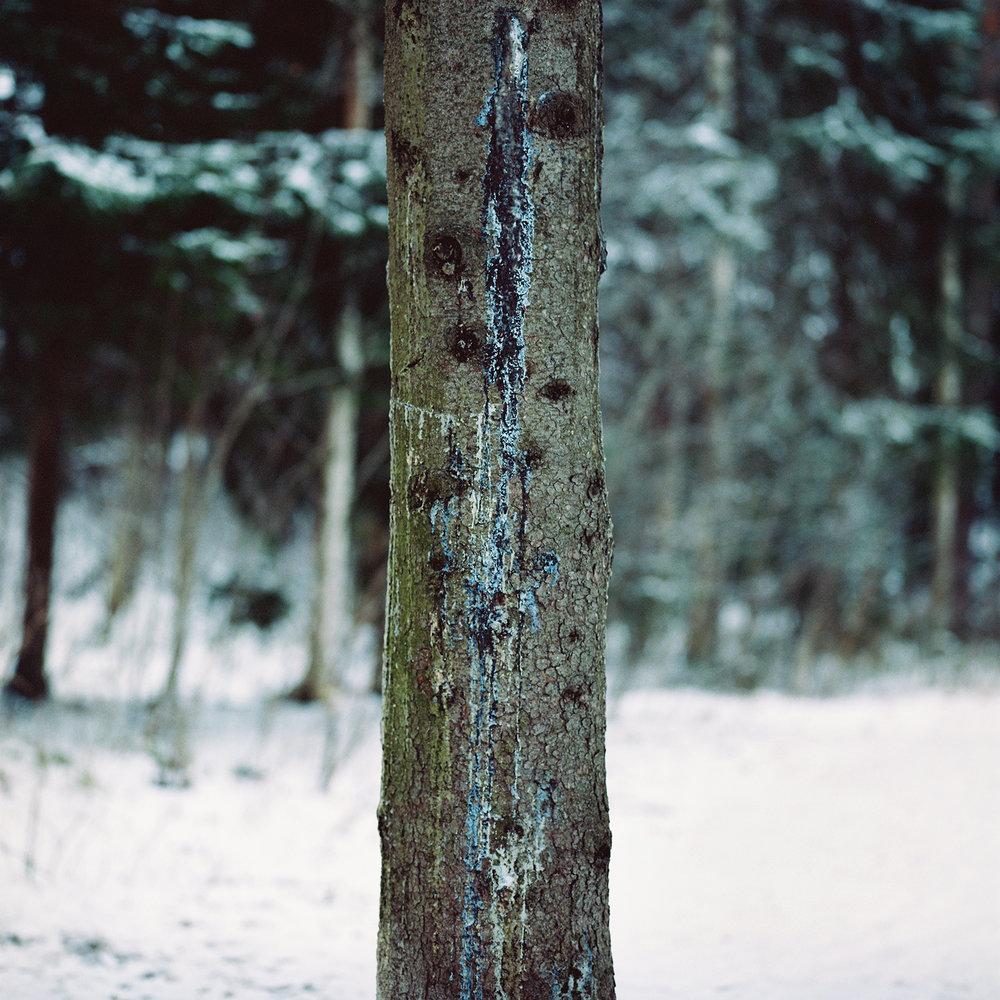treeportrait.jpg