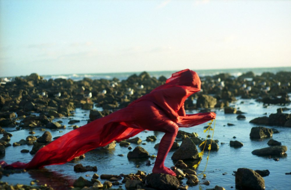 sea-creature1.jpg