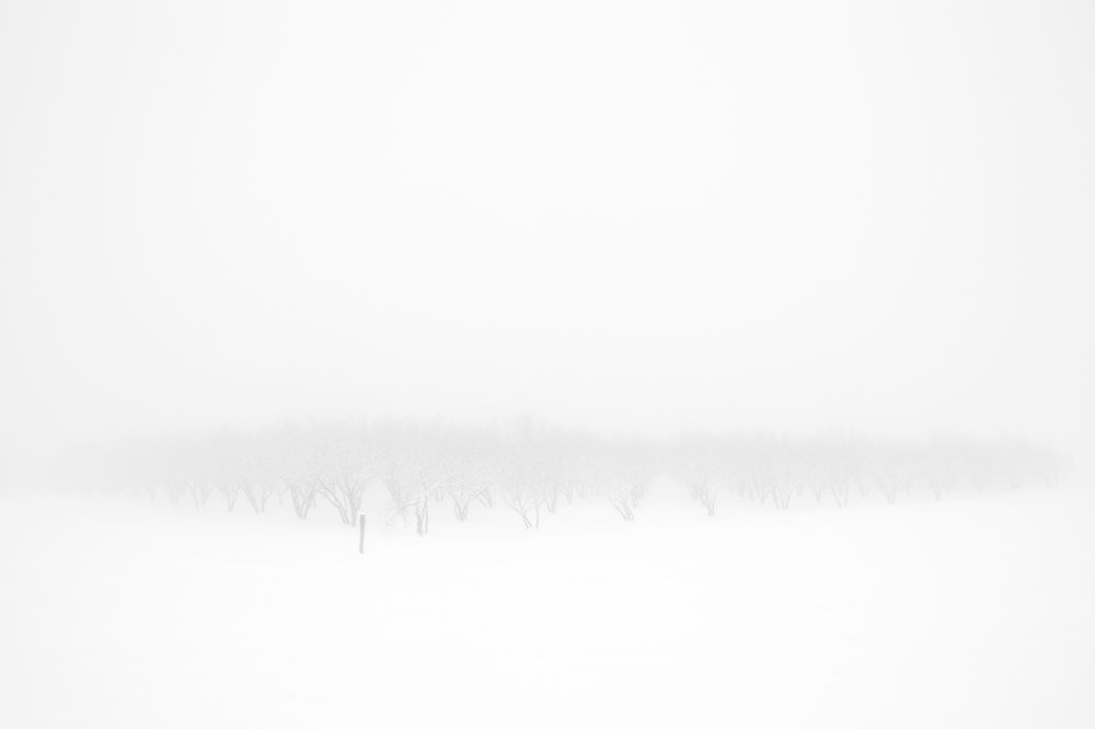 Inverno #5.jpg