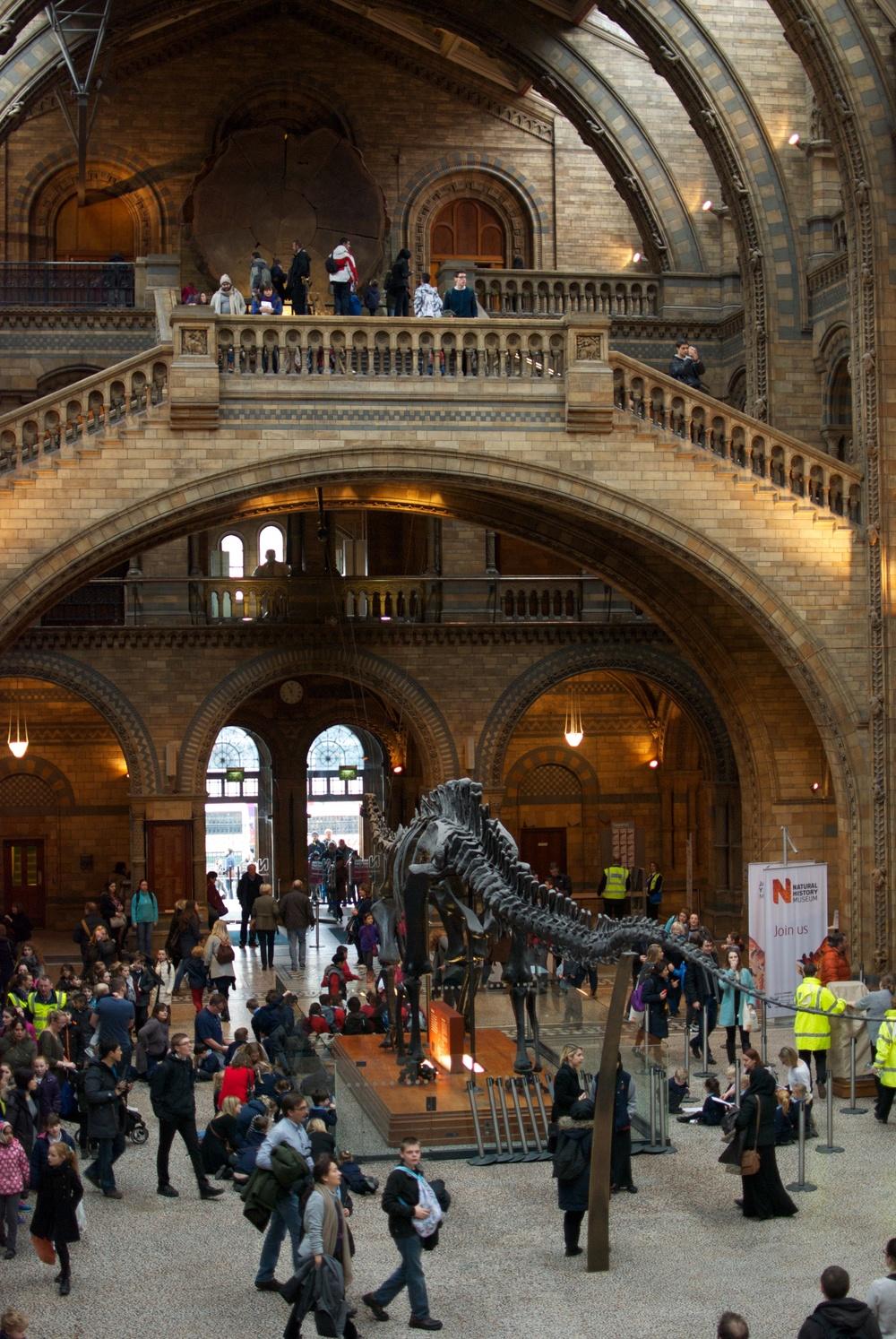 Museo de Historia Natural 4