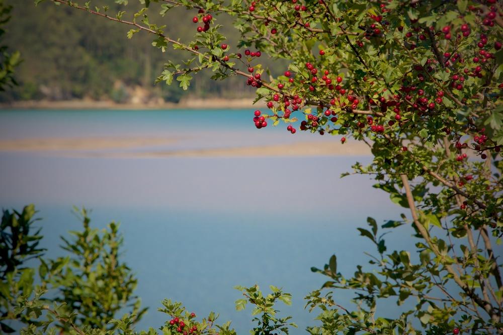 Estuario rio Anllons