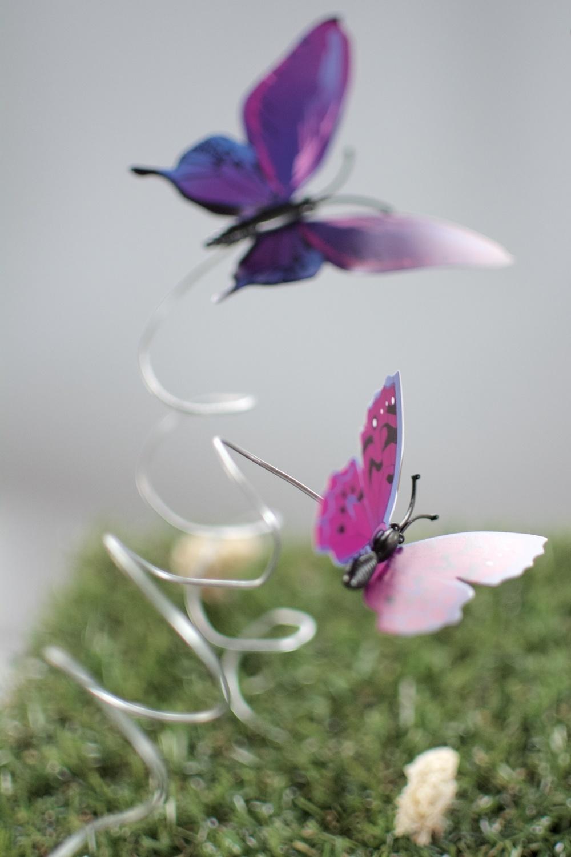 Paquete regalo mariposas