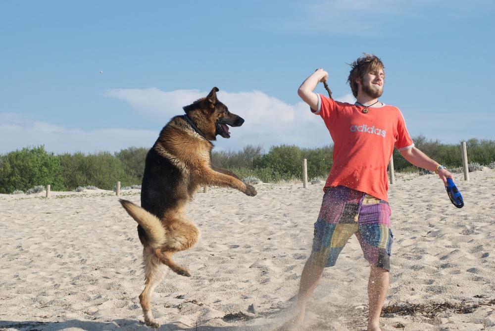 Pastor alemán jugando en la playa
