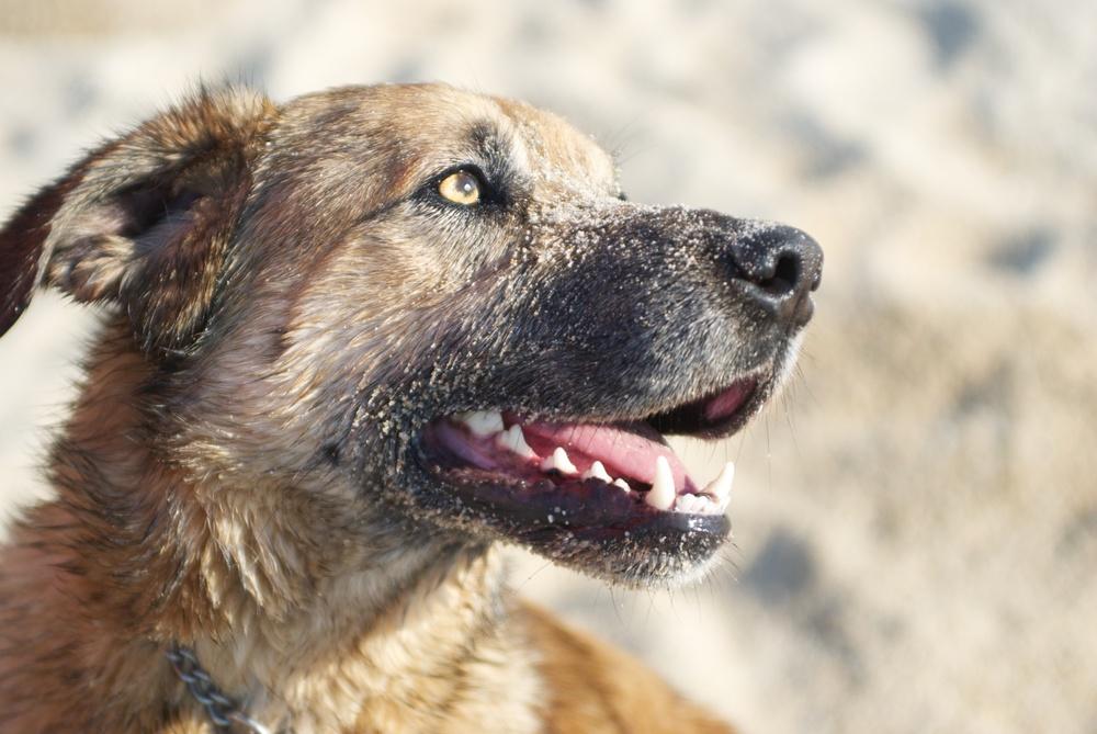 Retrato perro en la playa