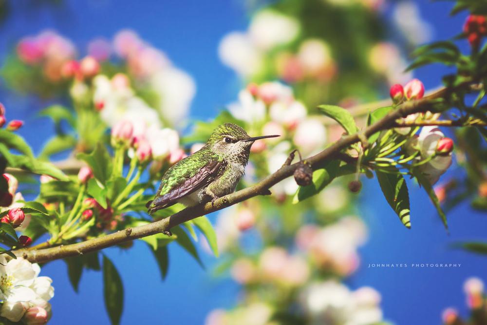 humming-bird.jpg