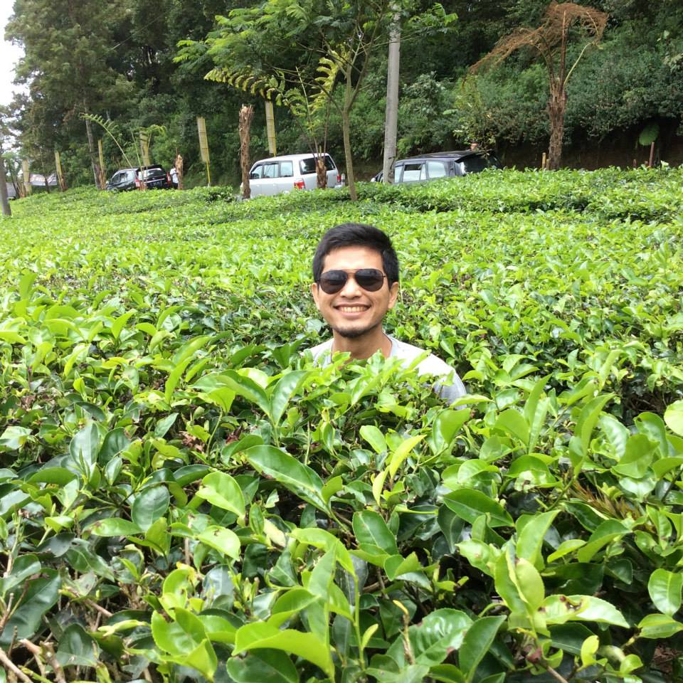 rino_at_tea_plantation.jpg