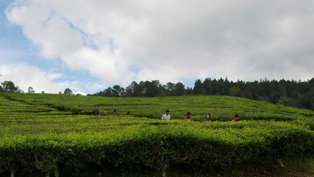 Group - Tea plantation near Bandung, Indonesia