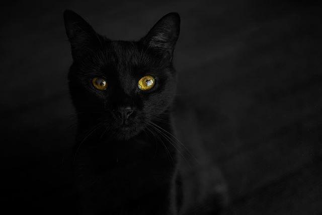 #pusi #blackcat