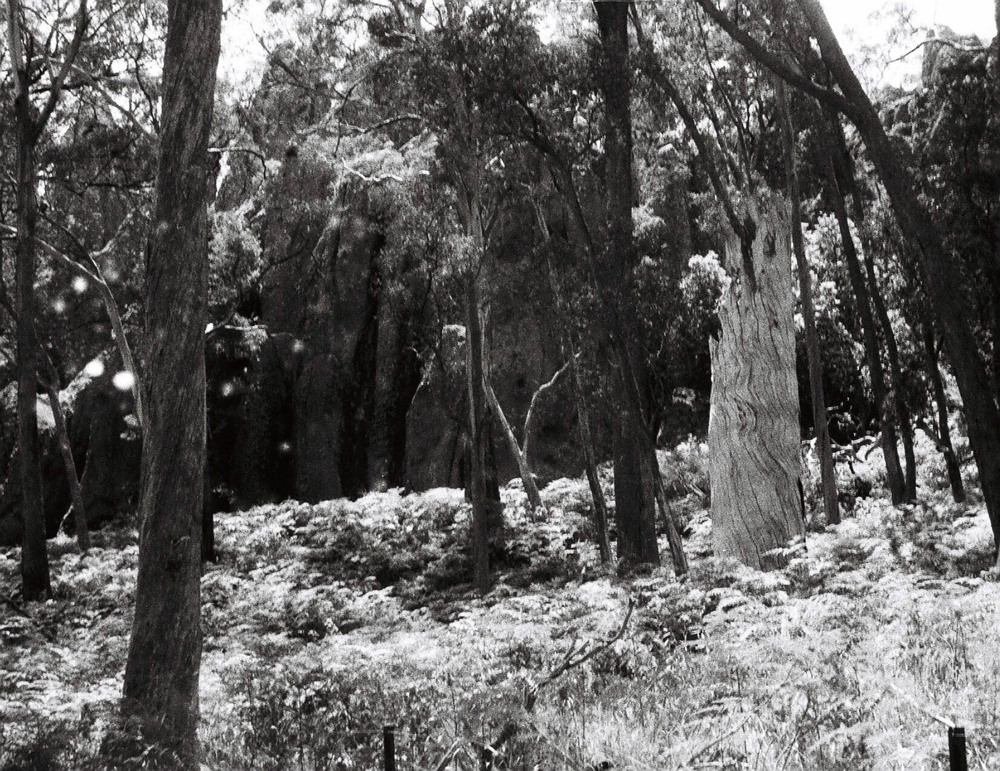 Base of Hanging Rock, Victoria, 110mm Canon 110ED 20.jpg