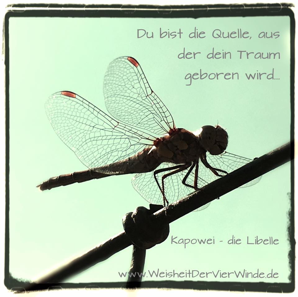 Libelle_Weisheit der Vier Winde
