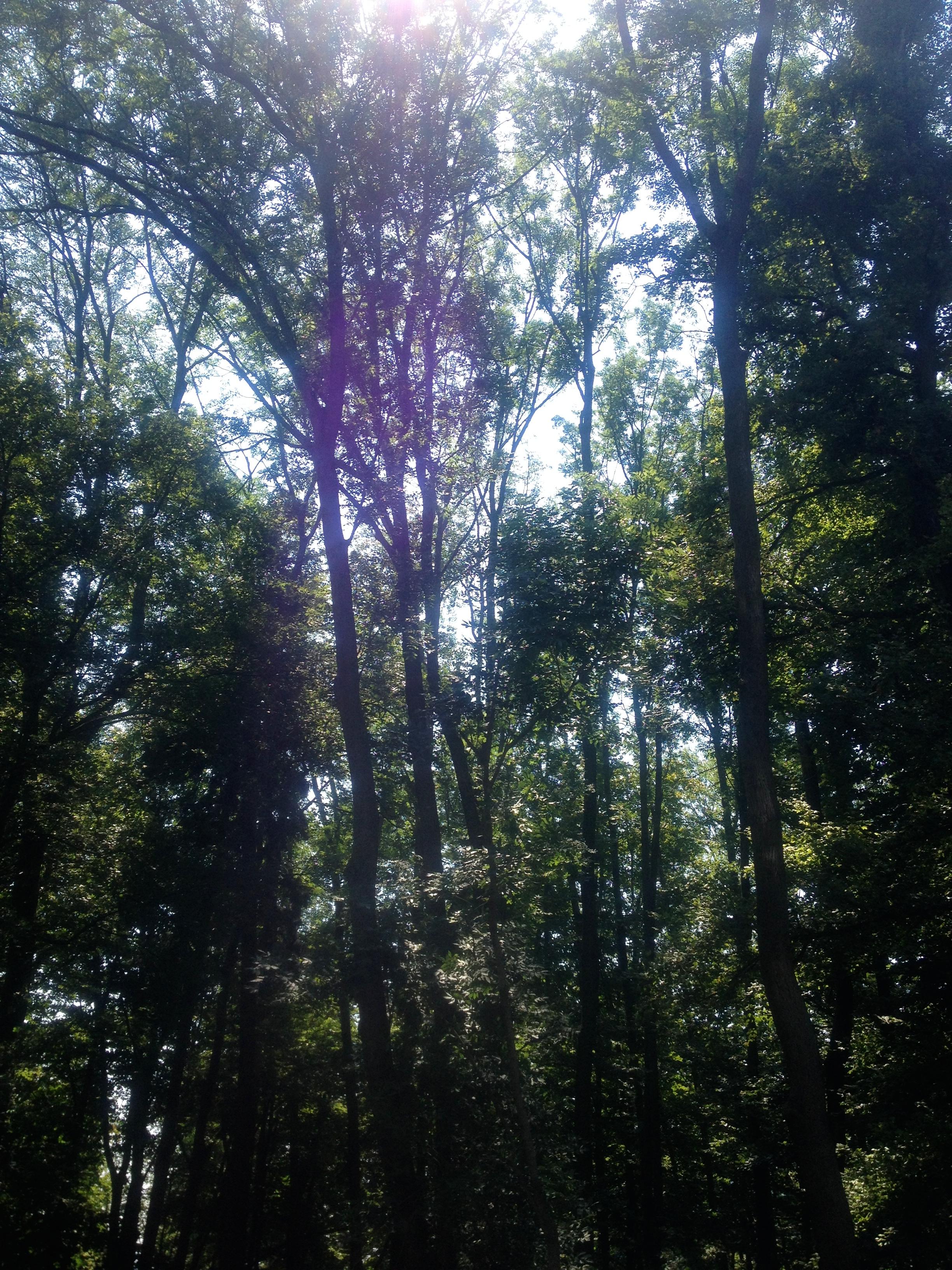 Gorgeous trees.