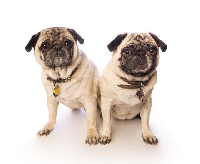 placa de identificação para cães