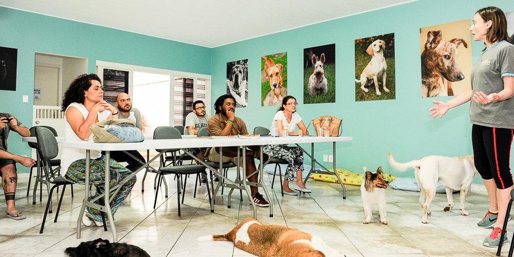 Reabilitação de cães