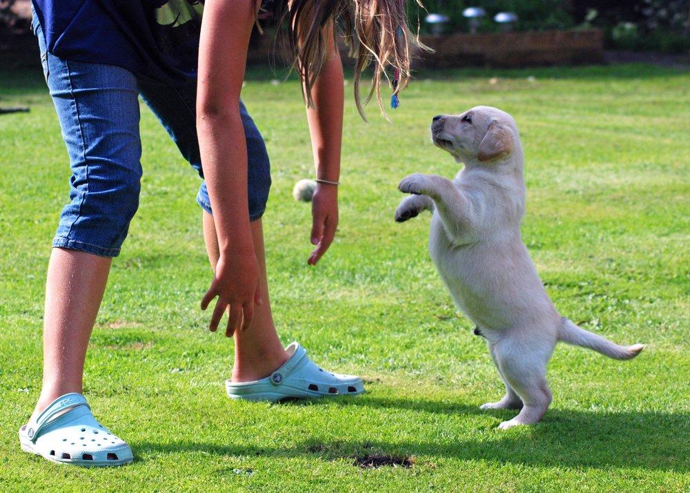 filhotes que pulam nas pessoas