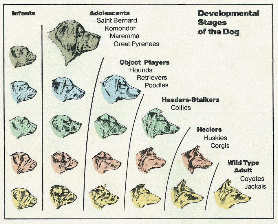 Educação Canina