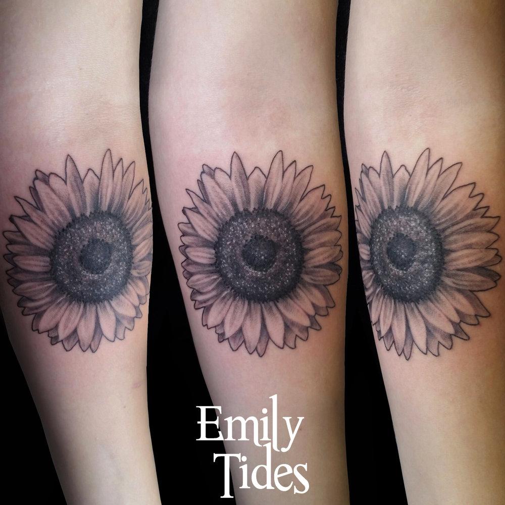 Sunflower  emily tides.jpg