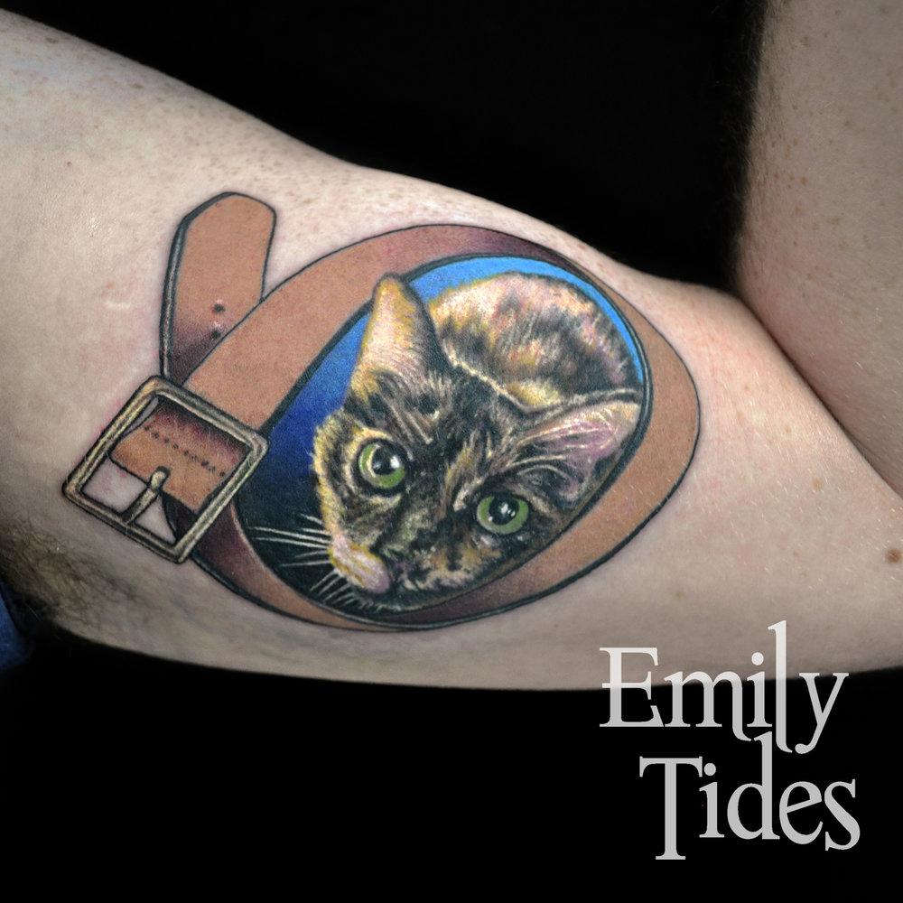 cat belt emily tides.jpg