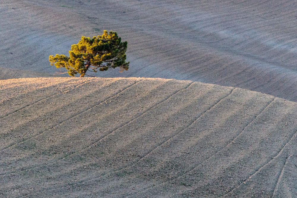 08102015-Toscane-1442.jpg