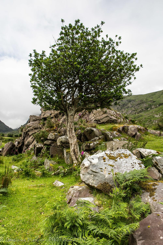 Irlande-1033.jpg