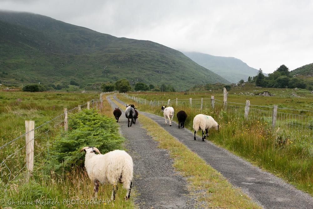 Irlande-1185.jpg