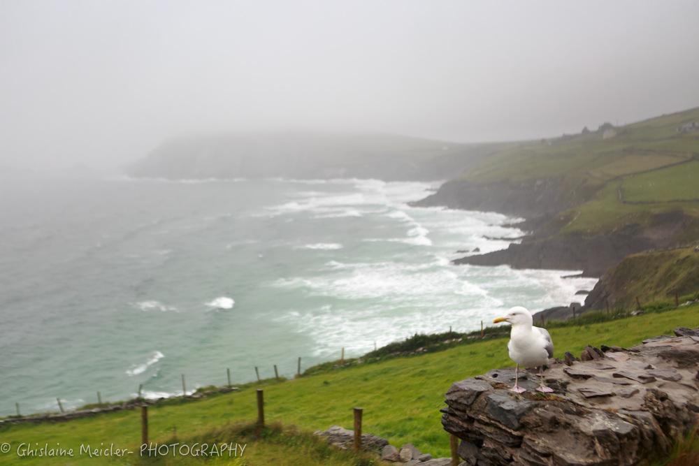 Irlande-1506.jpg