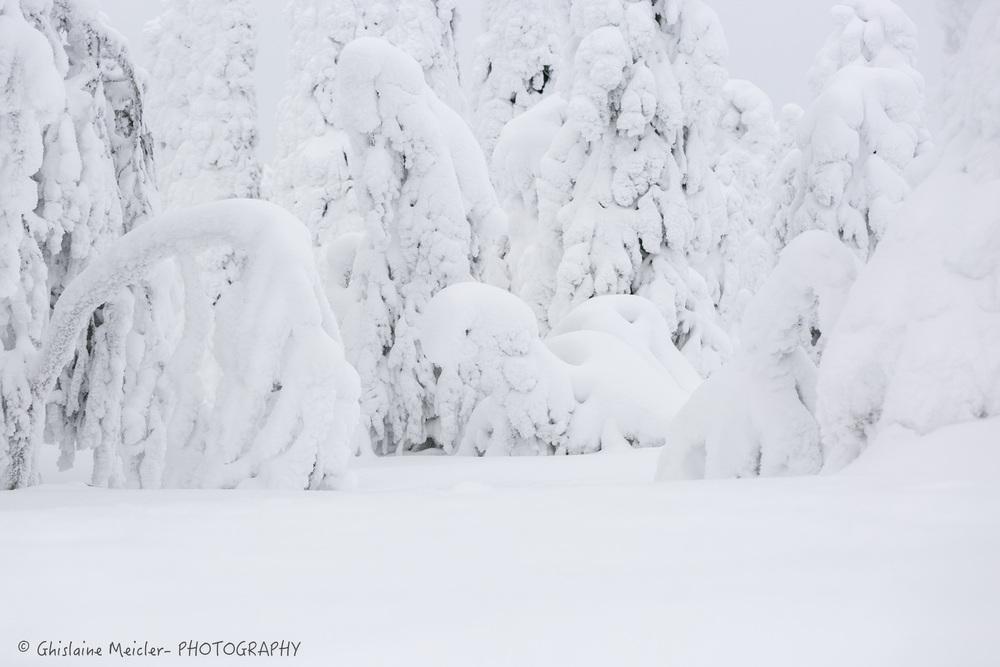 Finlande-494.jpg