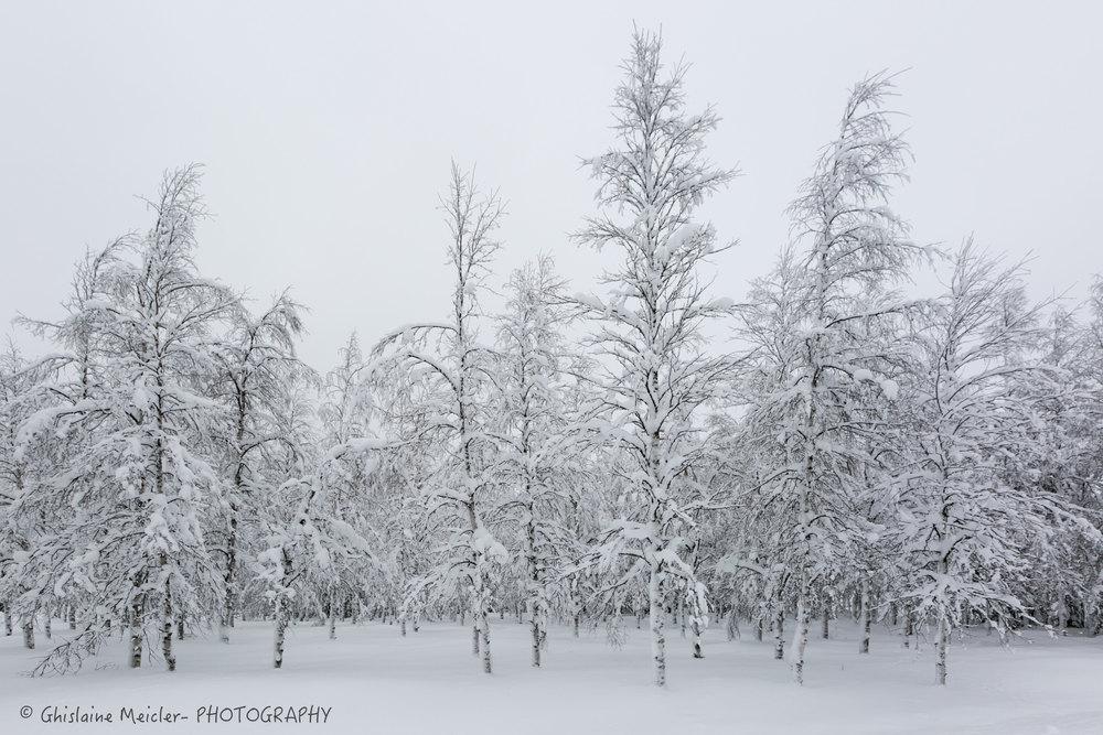 Ghislaine Meicler - Finlande-6348.jpg