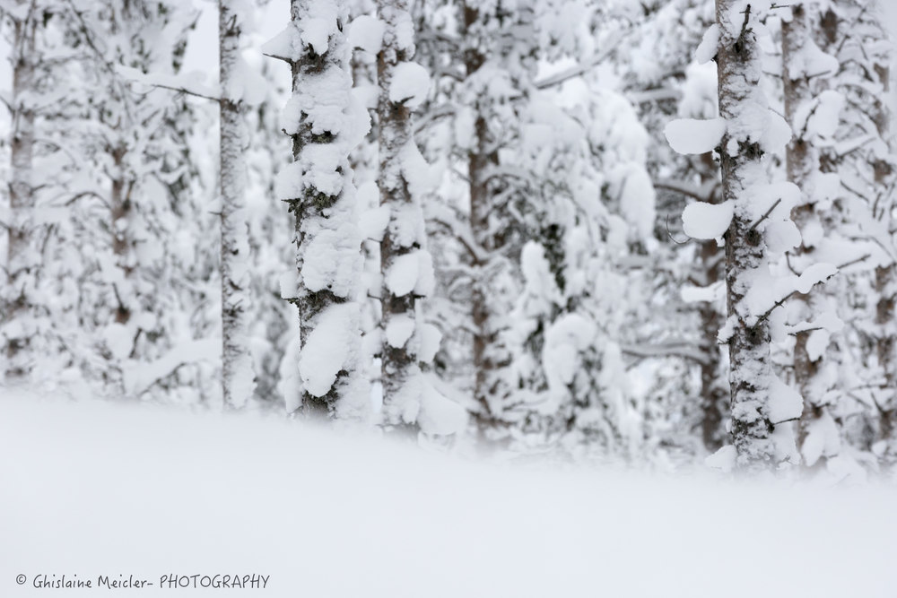 Ghislaine Meicler - Finlande-6395.jpg