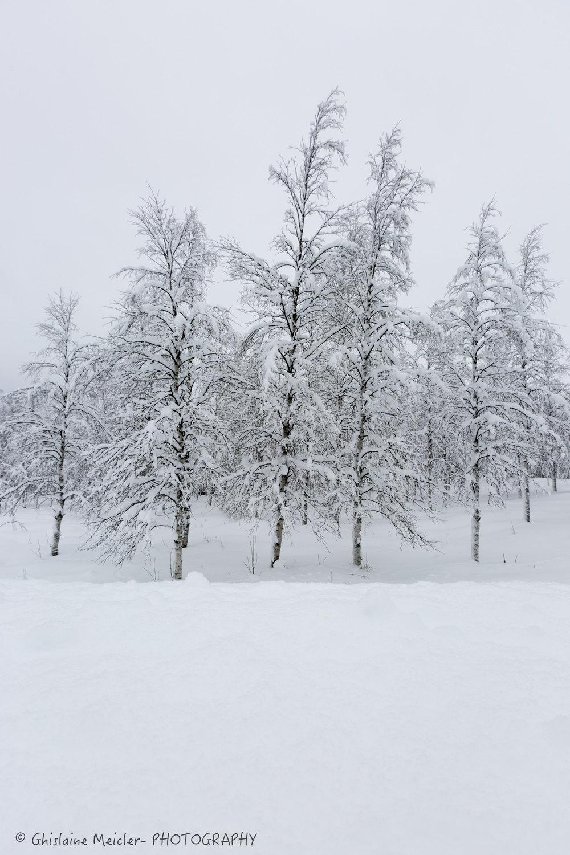 Ghislaine Meicler - Finlande-6352.jpg