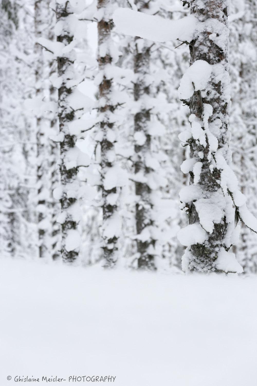 Ghislaine Meicler - Finlande-6388.jpg