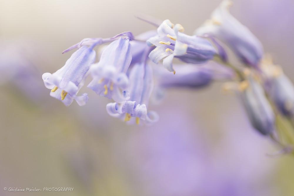 Fleur-2290.jpg