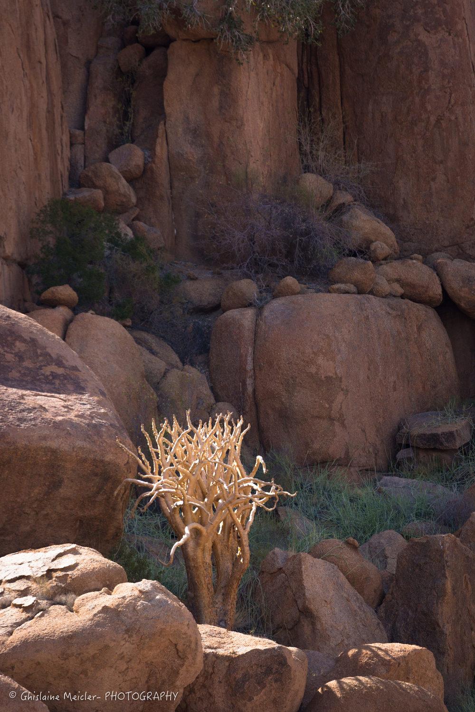 Namibie- 9165.jpg