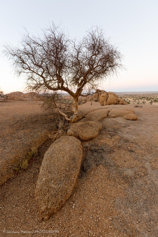 Namibie- 9979.jpg