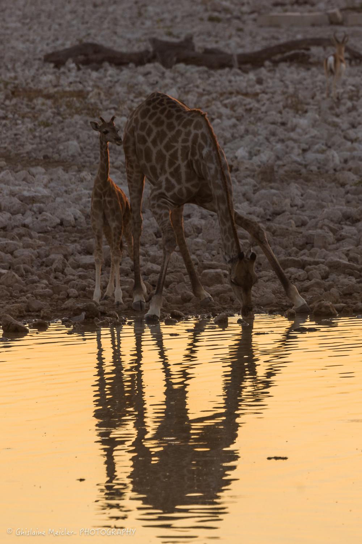 Namibie- 6979.jpg