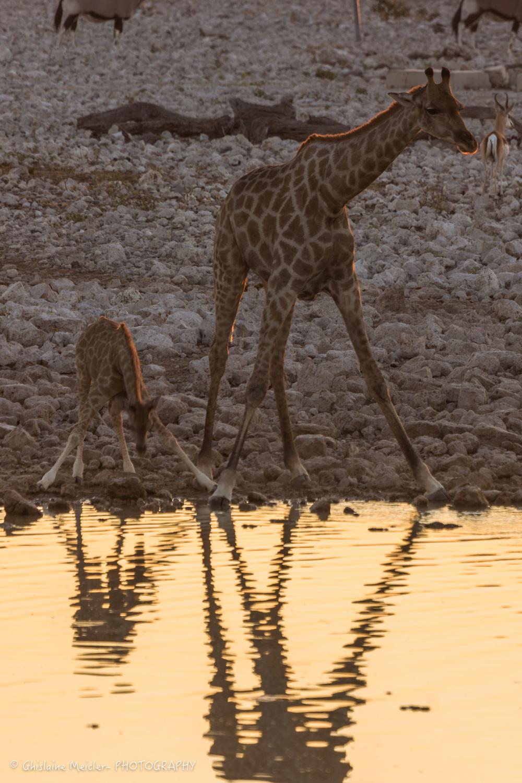 Namibie- 6981.jpg