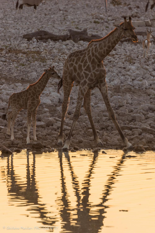 Namibie- 6982.jpg