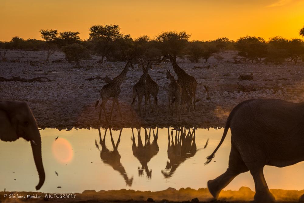 Namibie- 6947.jpg