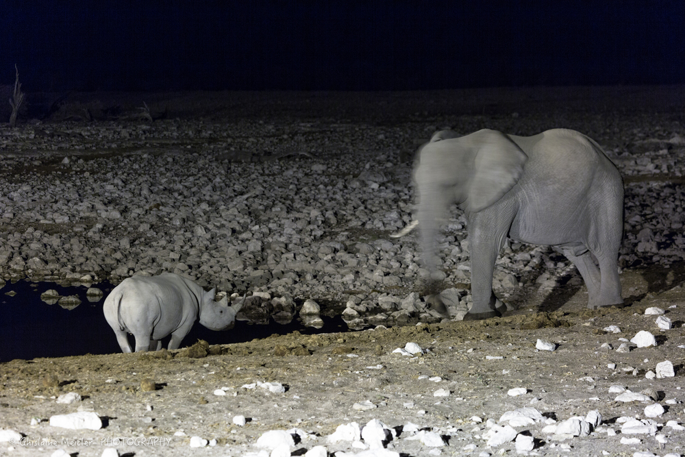 Namibie- 8112.jpg