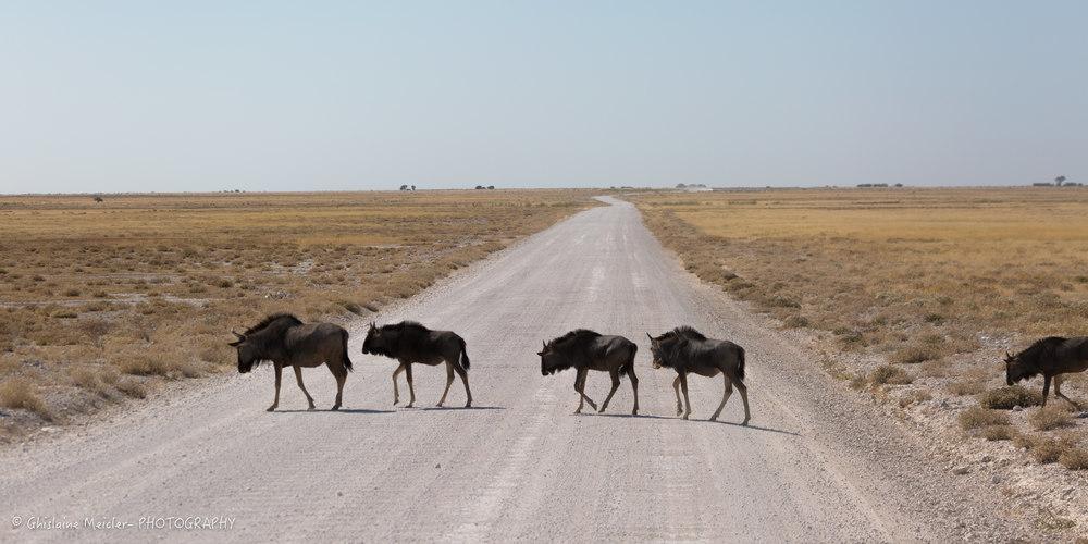 Namibie- 7904.jpg