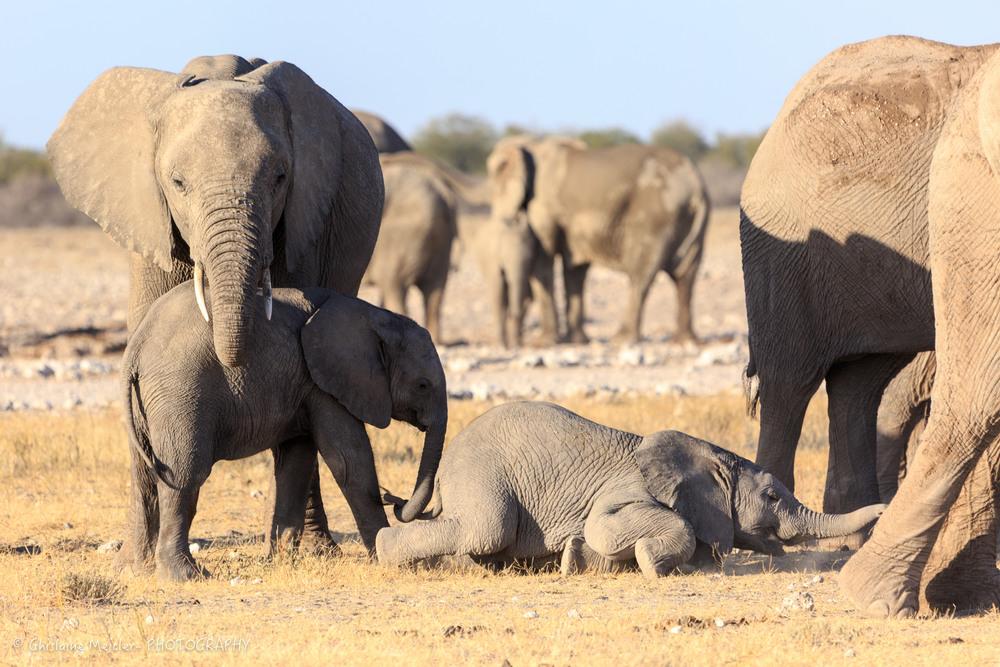 Namibie- 7329.jpg