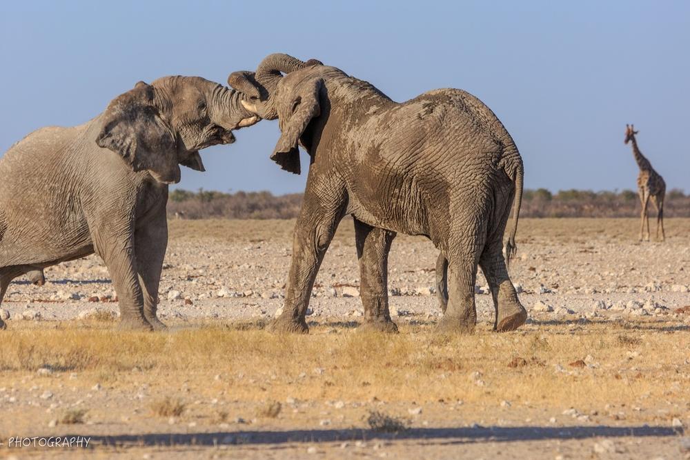 Namibie- 7225.jpg