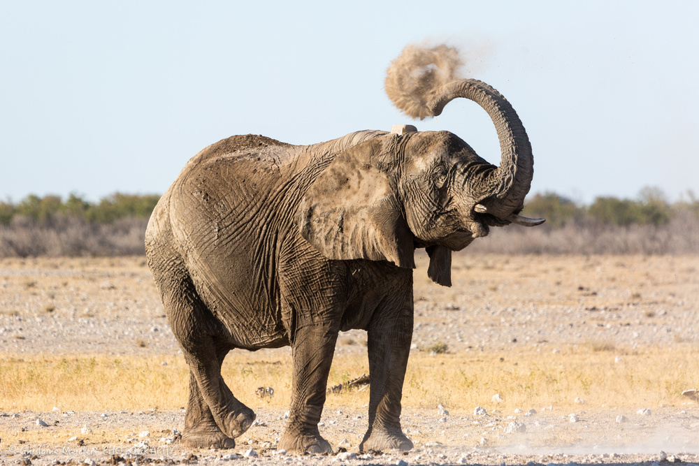 Namibie- 8066.jpg